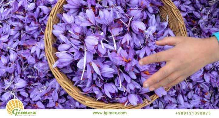 تولید زعفران صادراتی