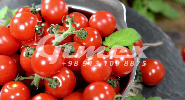 بهترین گوجه فرنگی صادراتی