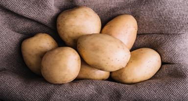 463584 PFPKOH 204 - خرید و فروش سیب زمینی صادراتی با بهترین قیمت !