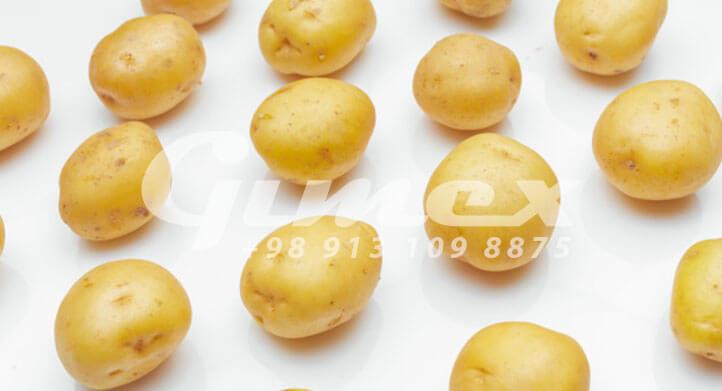 سیب زمینی صادراتی تازه